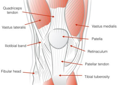 VMO and connective tissue around the kneecap
