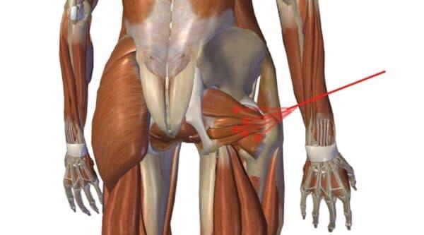 deep hip external rotators